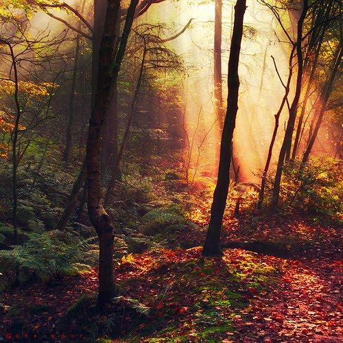 Forest Light, The Netherlands