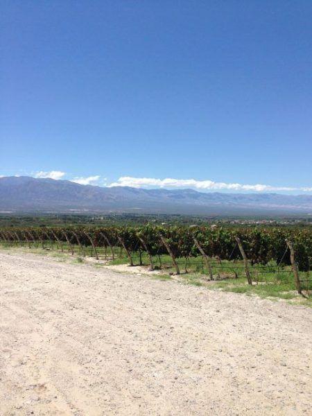 Bodega Piatelli Vineyards
