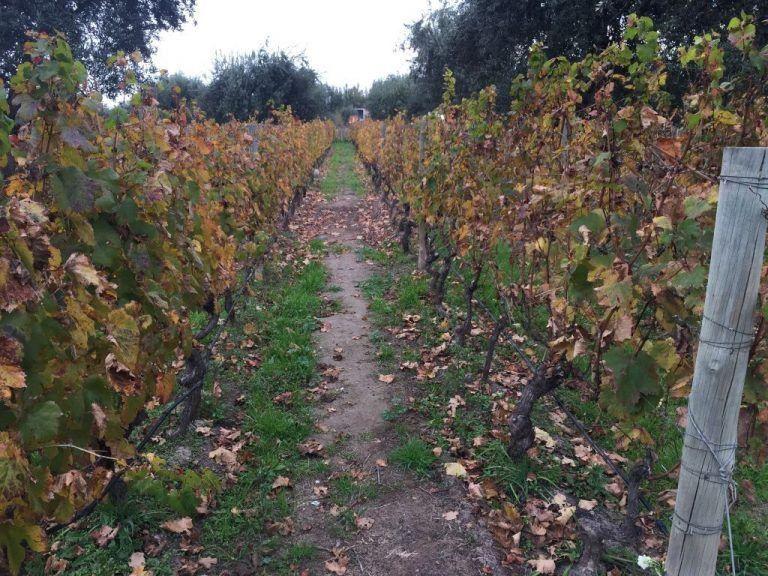 Viñedos de Mendel Wines