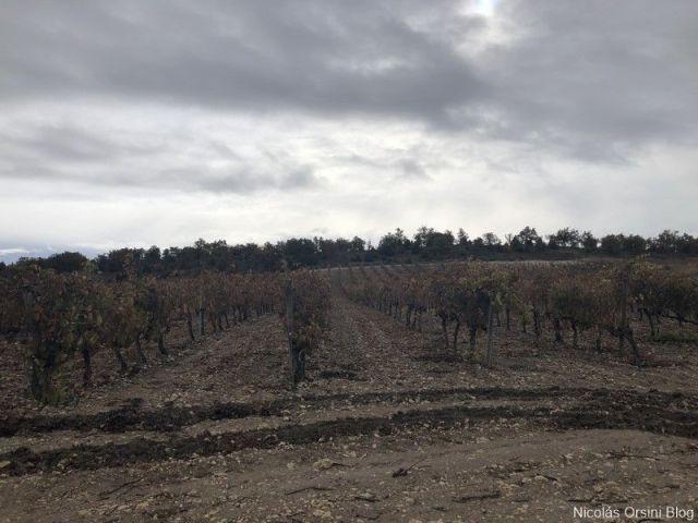 Algunas viñas de Bodega Montebaco