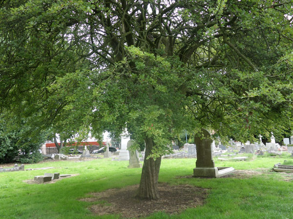 Wood Green Cemetery 6