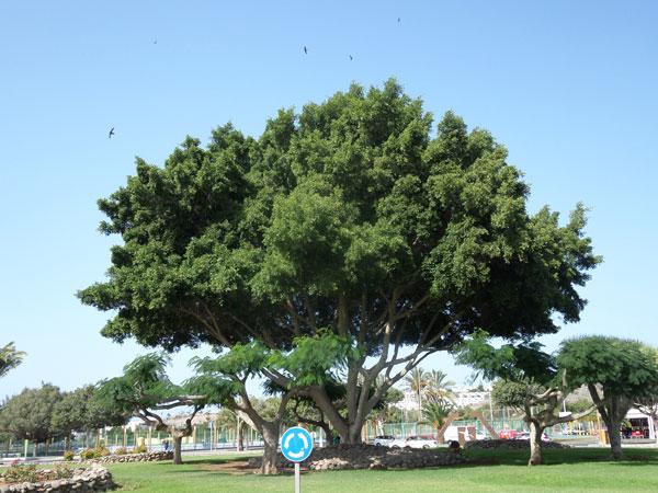 Gran Canaria - 7