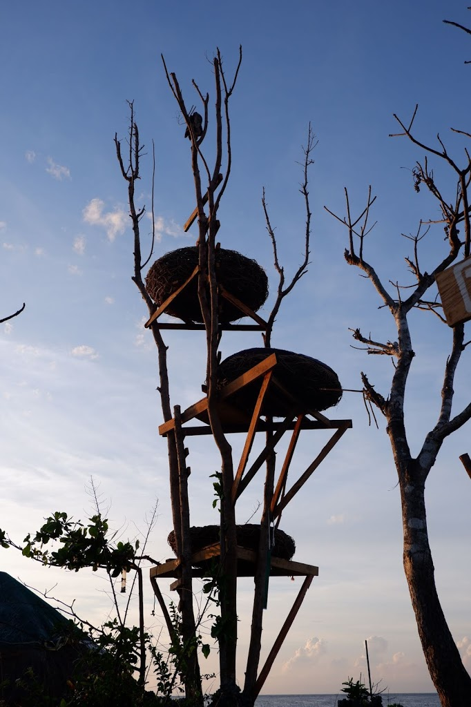 3 giant nests in bolinao
