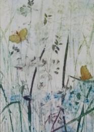 Gill_Kirk_Flowers&Butterfiles