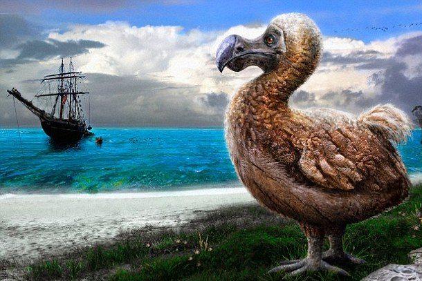 dodo effect