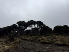 Kilimanjaro3_0012