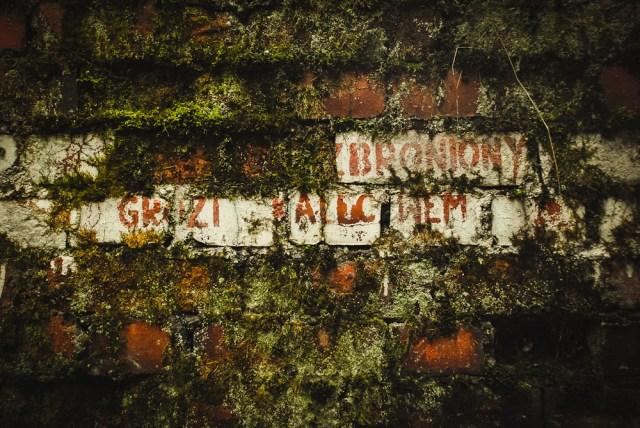 Net ir dabar gamta stengiasi užmaskuoti sienas