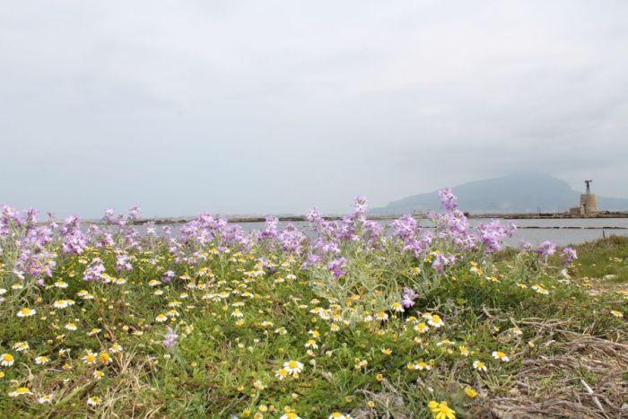 Saliny w Trapani, Wiosna saliny w Trapani, Saliny wiosną, Trapani, Sycylia, Saline di Nubia, Saliny w Nubii, Kwiaty na Nubii