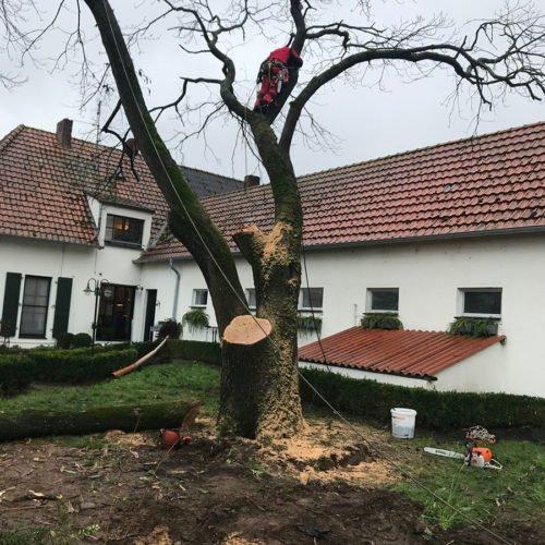 nierswalder-kuhhof-jrb-2019-kastanie-01