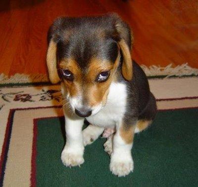 Puppy sculdig 250x237 Het zevende karmische patroon: schuld (of schaamte)