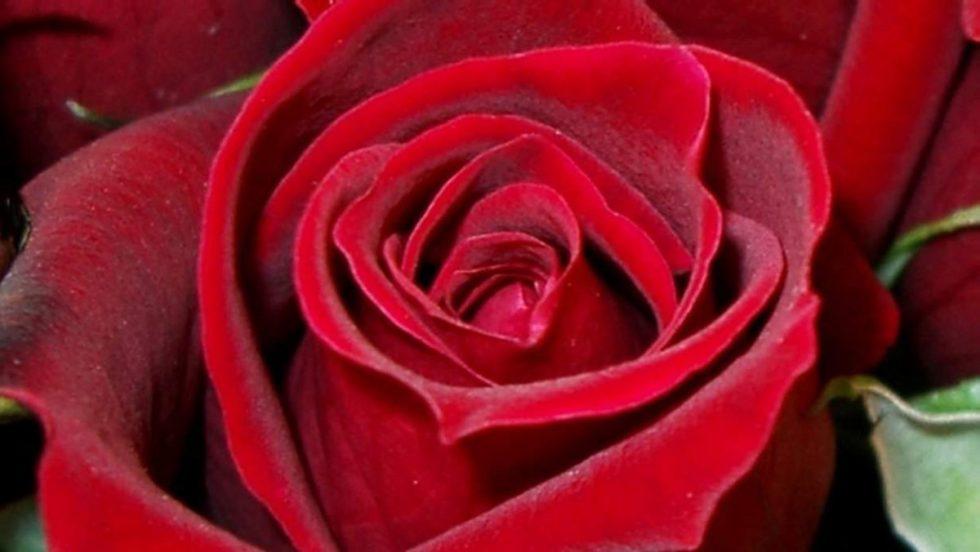 chakra meditatie rode roos