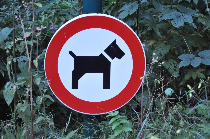 Zakaz wprowadzania psów nielegalny? No to czeka nas wiele zmian...