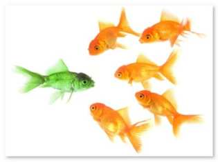 greenfish goldfish