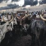 Cattle farming business plan in Nigeria
