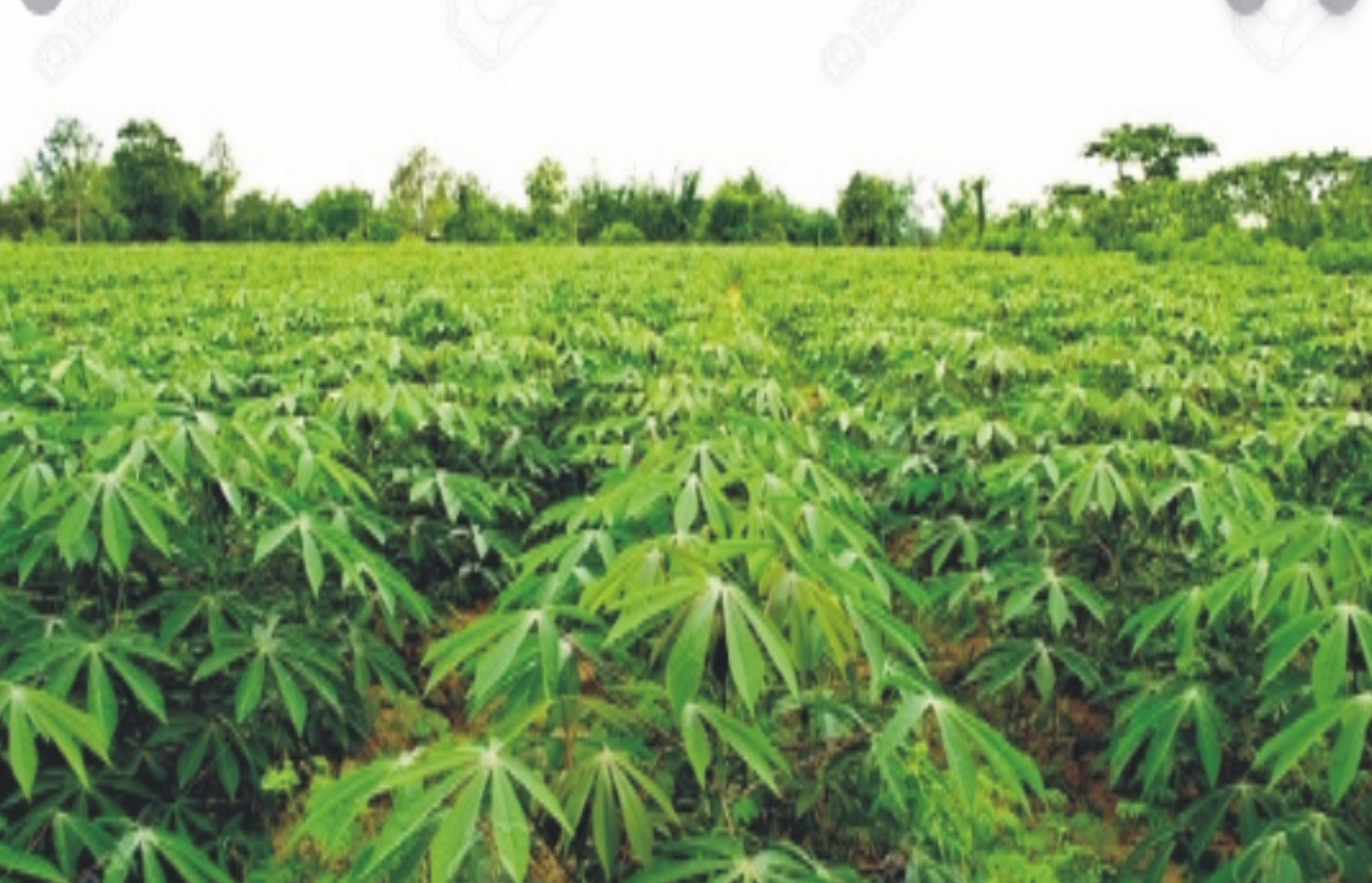 10 Most Lucrative Agricultural And Farming Business Ideas In 2021