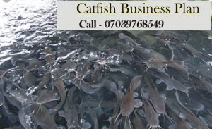 Catfish Business plan