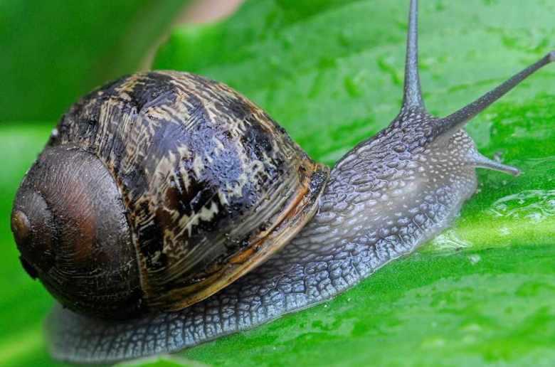 snail farming business