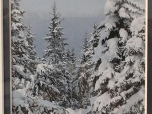 Winter Trees 10-x-12
