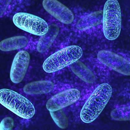 Illustration of mitochondria