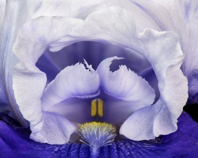 Blue Iris by Jim Turner