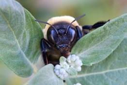 Watchful Bee by Cathrine Sasek