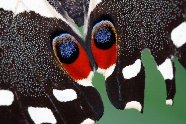 Butterfly Eyes