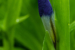 'Blue Bud; Green Leaves' by Emma Beatty Howells. Novice Digital. HM