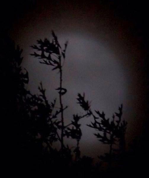 CO7~2~Novice~Shadows_Of_The_Night~64