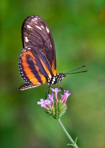 Necturing Butterfly by Cathrine Sasek
