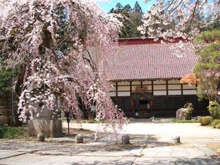 大隣寺の桜の写真