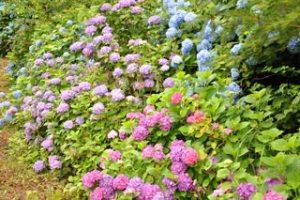 美花園の写真2