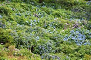 美花園の写真3