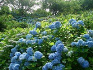 美花園の写真4
