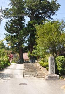 東禅寺のめおと杉の写真