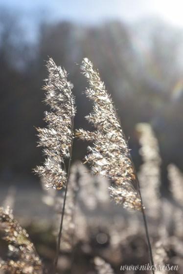 Gräser im Sonnenschein