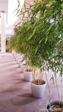 Bambus im Topf