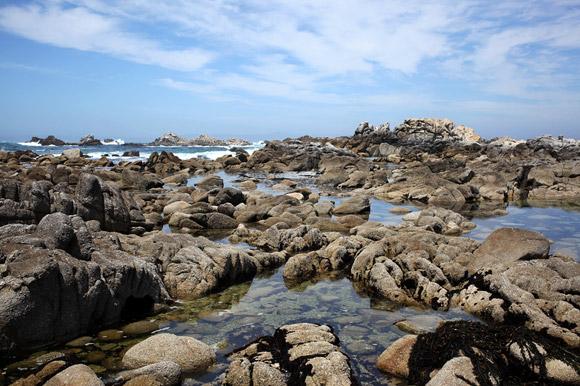 Tide Pools Near Carmel Ca