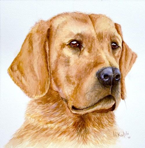 labrador-portrait