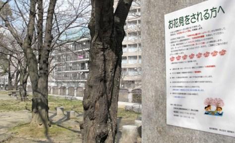 今春から花見区画が有料になる福岡市の天神中央公園(13日)=共同