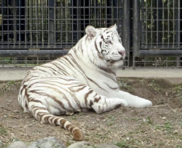 「鹿児島市の平川動物公園」の画像検索結果