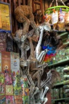 Lama-Föten werden von Kräuterweibern als Glücksbringer angeboten.