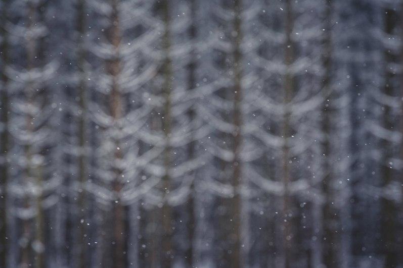 noir-flohay-winter-hohes-venn-hautes-fagnes-fotografie