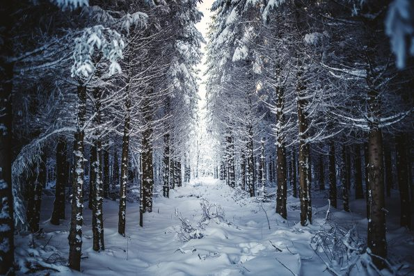 winter-wood-landscape-photography