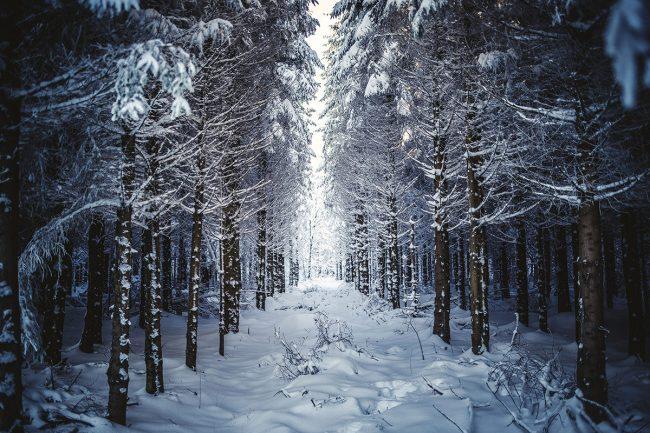 winter-wood-landscape-photography