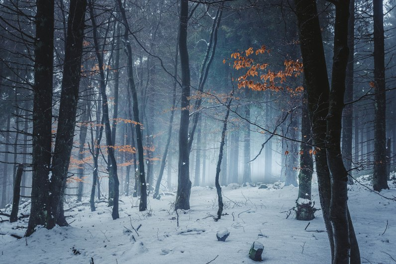 winter-woods-misty-photography