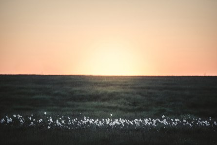 wollgras-hohes-venn-eifel-landschaftsfotografie