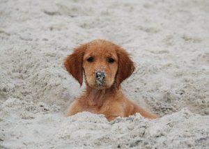 ΣΚΥΛΙΑ, ΠΑΡΑΛΙΕΣ, ΘΑΛΑΣΣΑ, Skilia paralia, Dogs at the Beach, ΤΟ BLOG ΤΟΥ ΝΙΚΟΥ ΜΟΥΡΑΤΙΔΗ, nikosonline.gr,