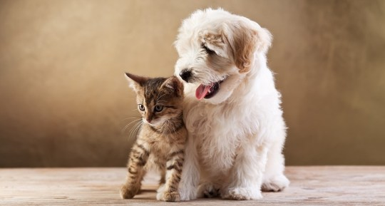 Best-friends-kitten-and-smal-e1377715929286