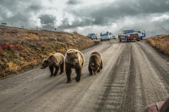 National Geographic, Φωτογραφίες 2016, Αλάσκα