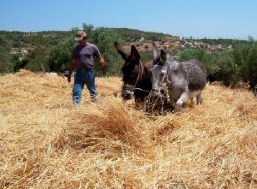 Τι ξέρετε για τον μήνα Ιούλιο; μήνας Ιούλιος, month, July, nikosonline.gr